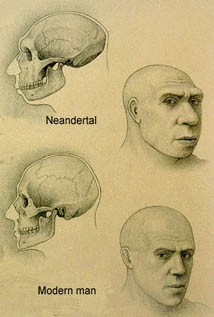 Neanderthal Modern Man Comparison