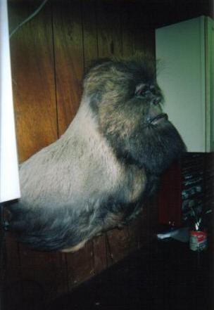 Sasquatch Shoulder Mount