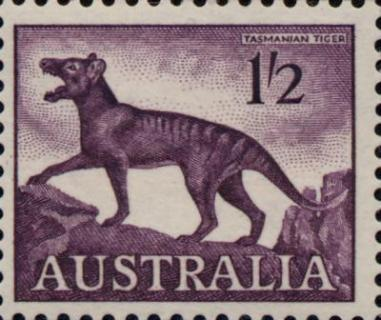 Thylacine