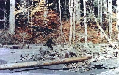 Patterson Gimlin Bigfoot Film