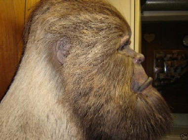 Stuffed Sasquatch