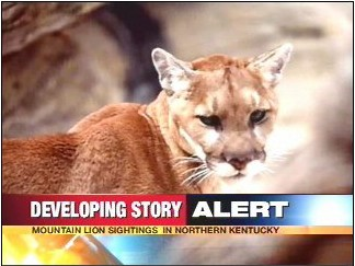 Kentucky Cougar Sightings
