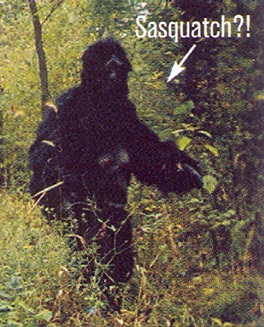 real bigfoot caught on tape