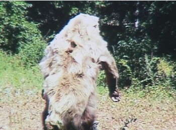 Atoka County Bigfoot
