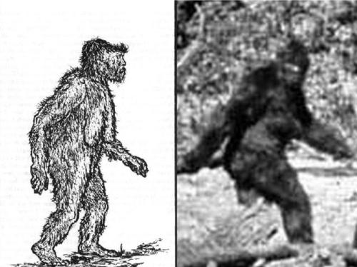 Drawings Of Sasquatch