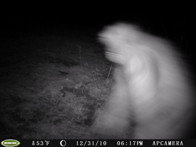 Ohio Bigfoot Game Cam Photo