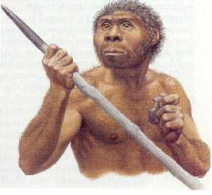 Homo erectus