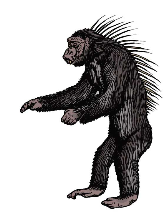 Spiny-Backed Chimpanzee, Tim Morris2