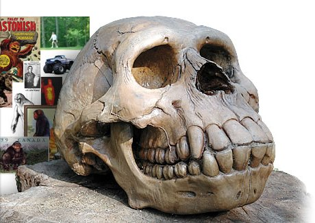 Sasquatch Skull baffles Scientists!