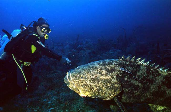 12-kg grouper is winning catch at Spores largest deep sea fishing ...