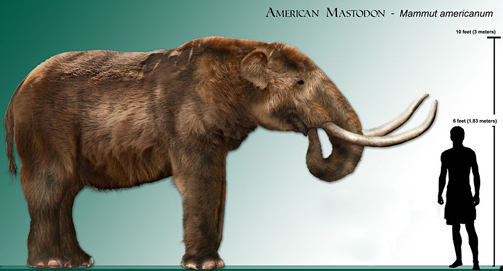 mastodont_gigantism_fossil_record_paleontology_mammoth_mastodontti.jpg
