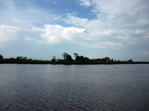 the dark waters of the Altamaha River